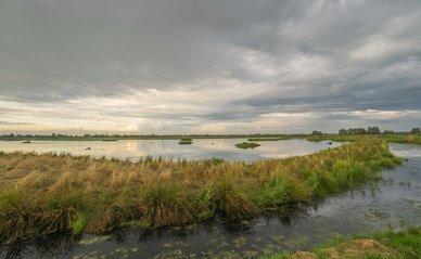Waterberging landschap weiland