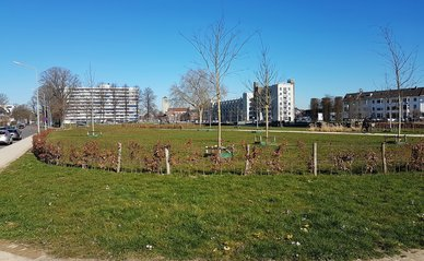 Koningspark op de Groene Loper, Maastricht