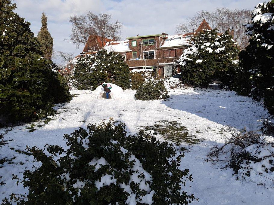 Het plantsoen in de winter van 2021, een prima plek voor een iglo