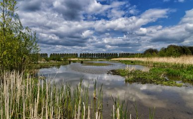 """Het Laarzenpad 01 Biesbosch, Dordrecht"" (CC BY 2.0) by PAUL-fotografie-Netherlands"
