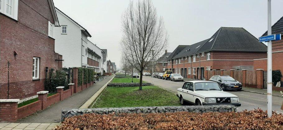 Ridderzwam