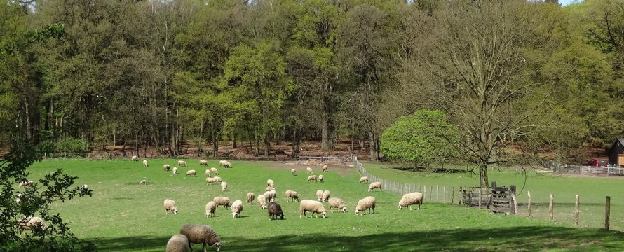 Nederland weiland