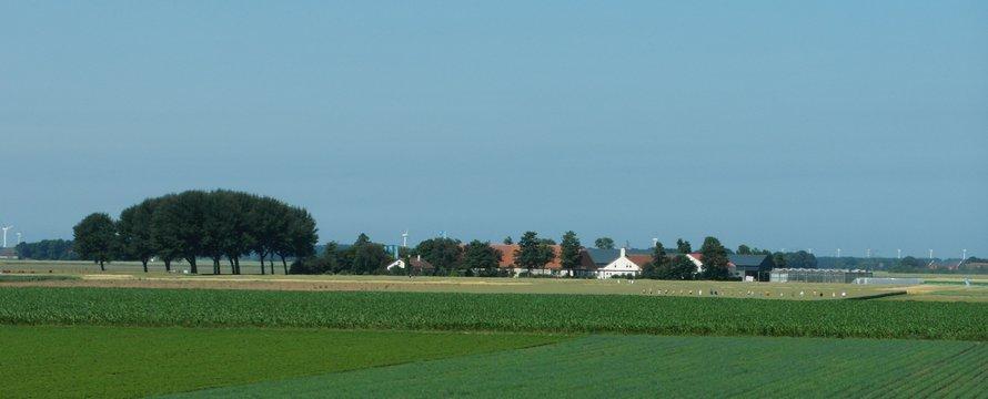 flevoland weiland