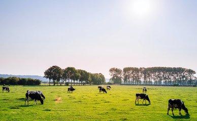 koeien in weiland -> Photo by Leon Ephraïm on Unsplash