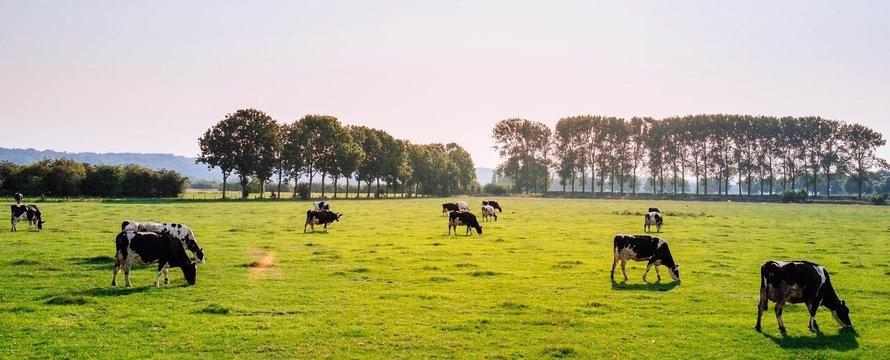 Landschap met koeien_Photo by Leon Ephraïm on Unsplash