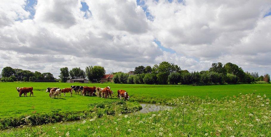 Schipluiden Midden Delfland