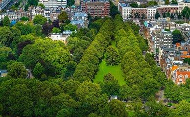 Groen park in de stad