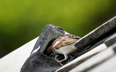 Mus maakt nest op het dak