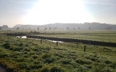 Utrecht polder